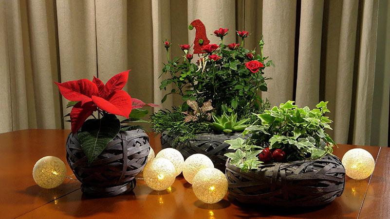 Świąteczne dekoracje z roślinami