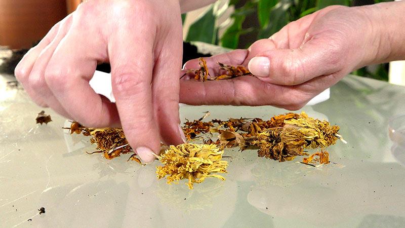 Luty – Jakie rośliny kwitnące należy wysiać, rozsady kwiatów