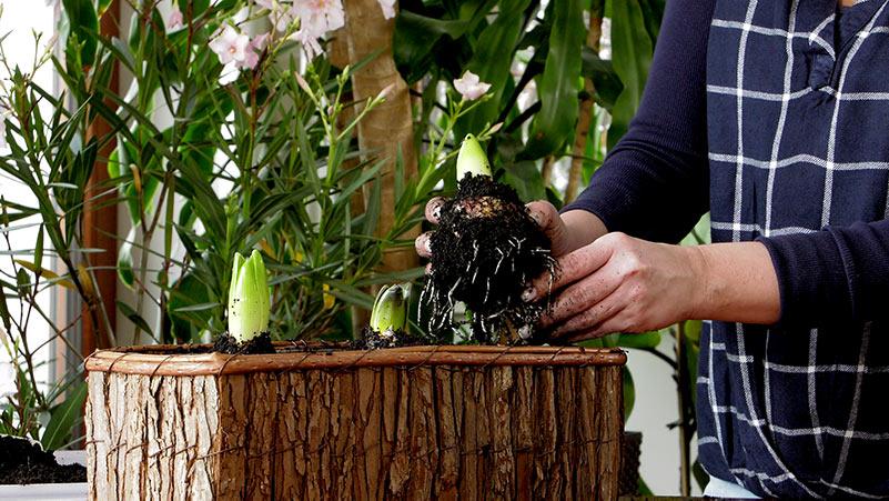 Luty w ogrodzie – kalendarz ogrodnika