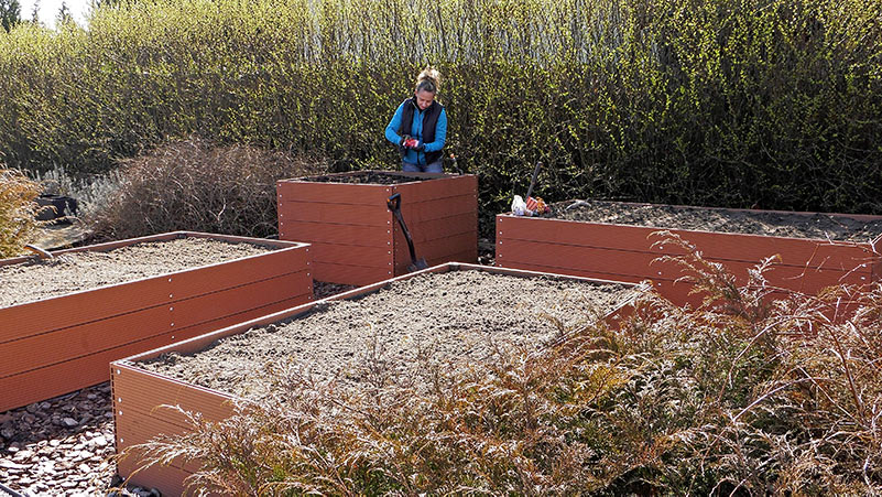 W marcu wysiewamy na rozsady,pomidory,szklarniowe pomidory,warzywa wysiewane w marcu,bakłażan,oberżyna,seler wysiew,jak wysiać w marcu,poradnik,warzywa w ogrodzie,uprawa warzyw,własne warzywa,poradnik ogrodnika,ogród warzywny,jak siać,jak zrobić rozsadę,początkujący ogrodnik,sałata,rzodkiewki,wysiew rzodkiewki,szpinak groszek cukrowy,przedplony w marcu,co na przedplon,bób,pietruszka,pasternak,salsefię,skorzonera,marchew,cebula,majeranek,bazylia