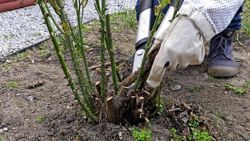 Marzec w ogrodzie – 08.03-14.03 – kalendarz ogrodnika