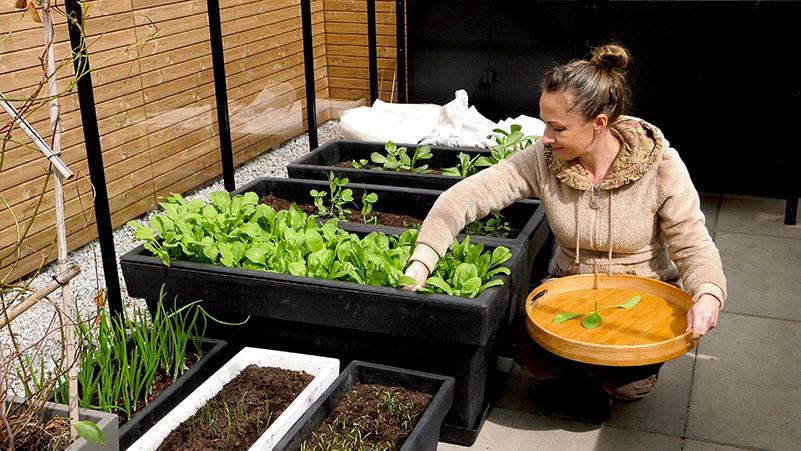 Uprawa warzyw w ogrodzie – przegląd