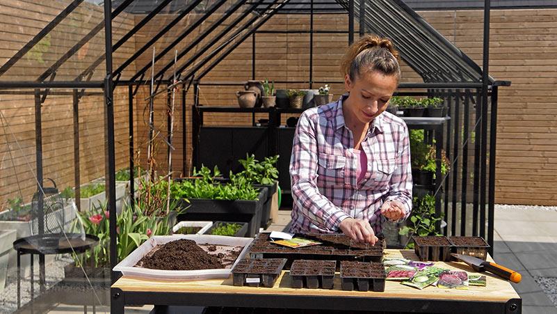 Wysiew warzyw kapustnych