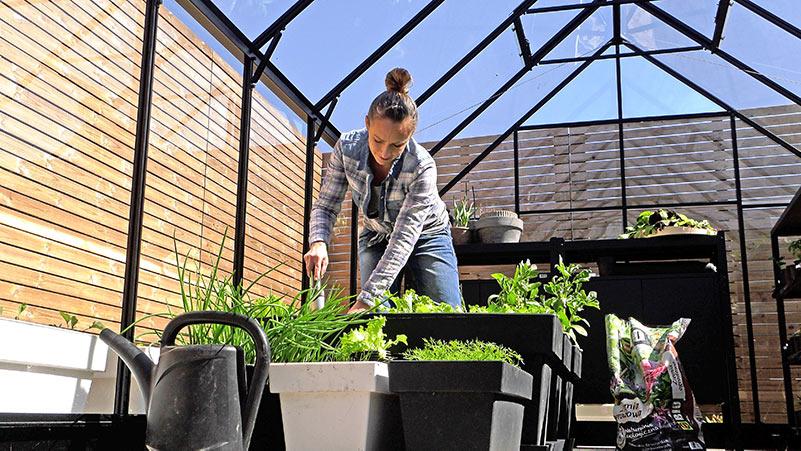 Ogród warzywny – przegląd
