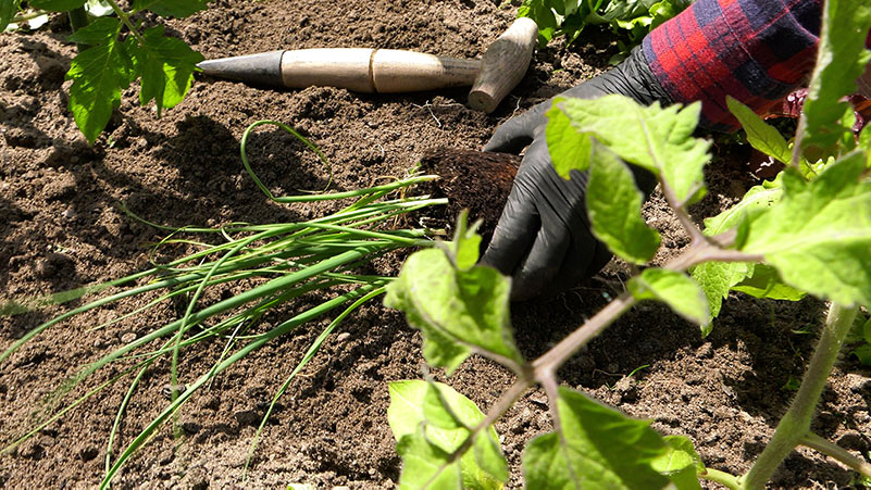 Jakie warzywa można, a nawet należy wysiać w maju