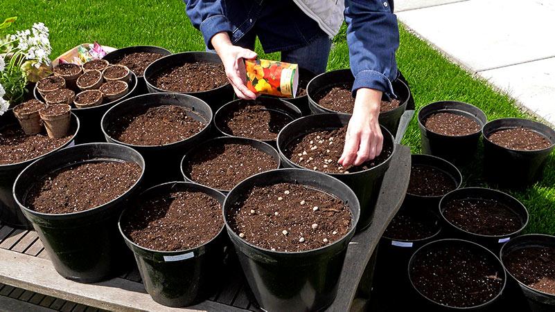 Wysiew kwiatów do donic w maju