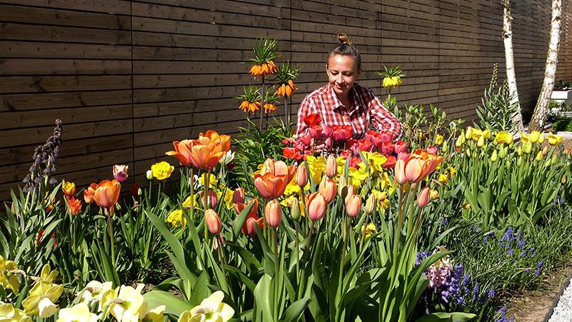 kwiaty, kwiaty cebulowe, kwiaty w ogrodzie, sadzenie kwiatów, nawożenie kwiatów, jak sadzić kwiaty cebulowe, kwiatki, tulipany, szafirki, żonkile, szachownice