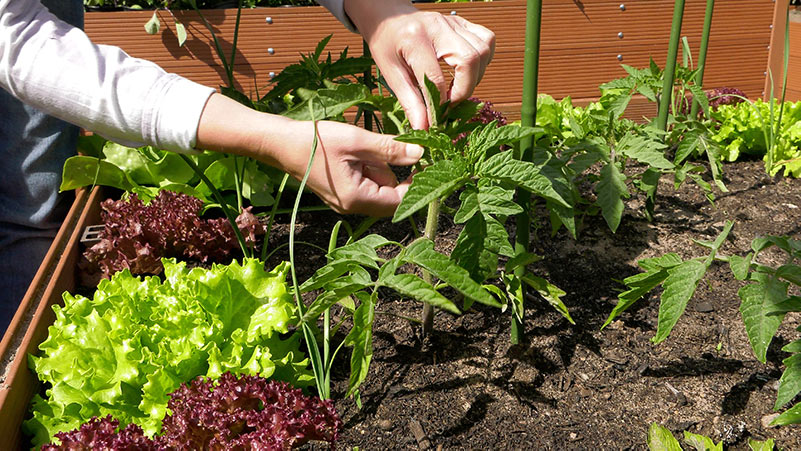 Maj w ogrodzie – 24.05 – 30.05 – kalendarz ogrodnika