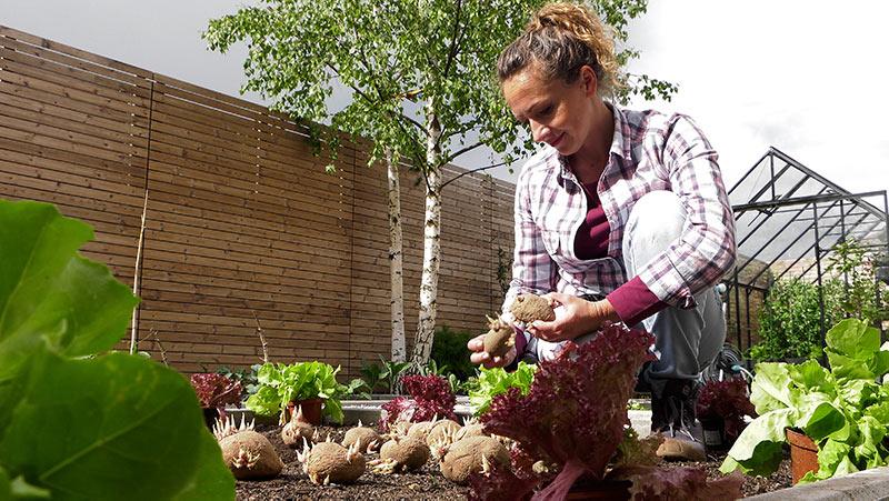 Przegląd warzywnika w czerwcu