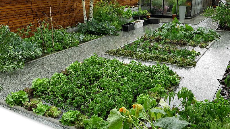 Warzywnik a ulewne deszcze. Jakie konsekwencje dla roślin?