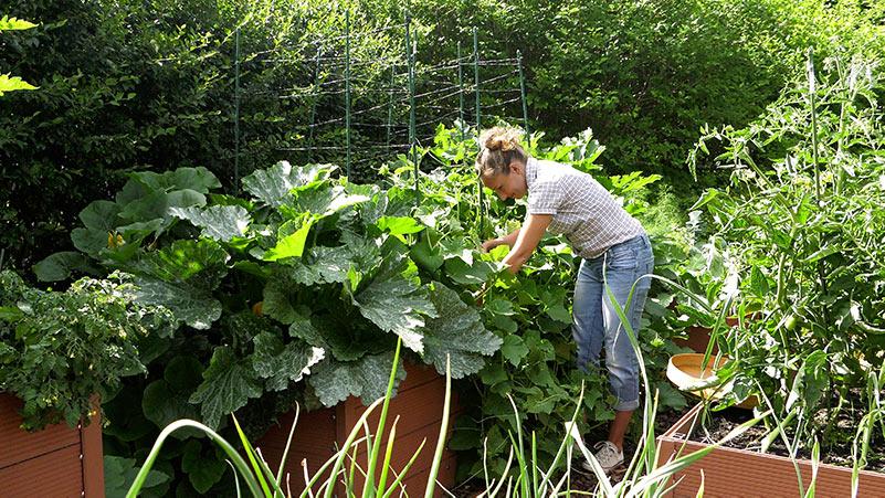 Zbiory warzyw – udane i niezbyt udane uprawy