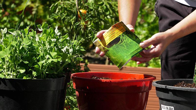 Jakie warzywa można wysiewać we wrześniu?