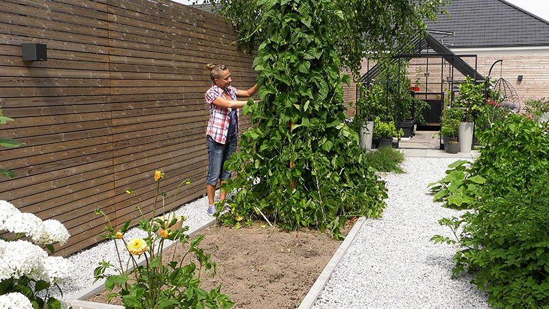 Sierpień w ogrodzie 02.08 – 08.08 kalendarz ogrodnika