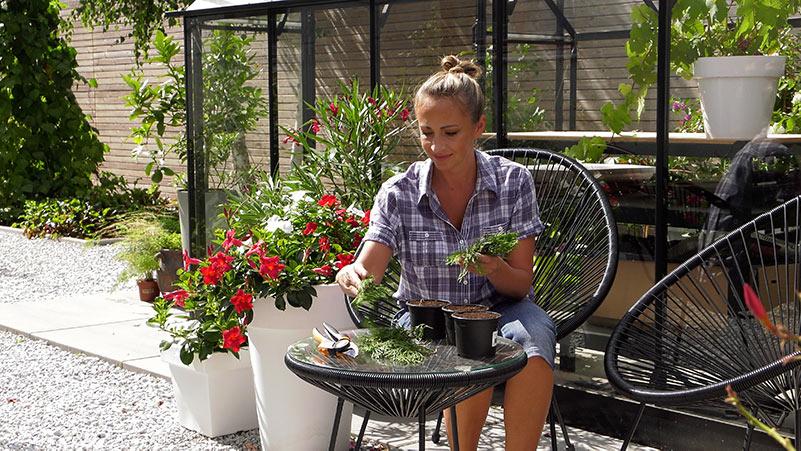 Sierpień w ogrodzie 09.08 – 15.08 kalendarz ogrodnika