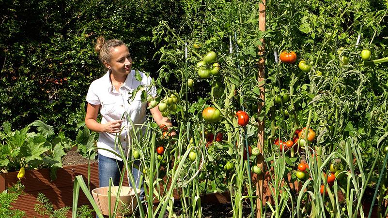 Sierpień w ogrodzie 16.08 – 22.08 kalendarz ogrodnika