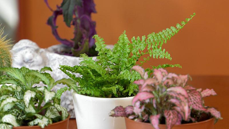 Rośliny w wersji mini. Urocze maleństwa