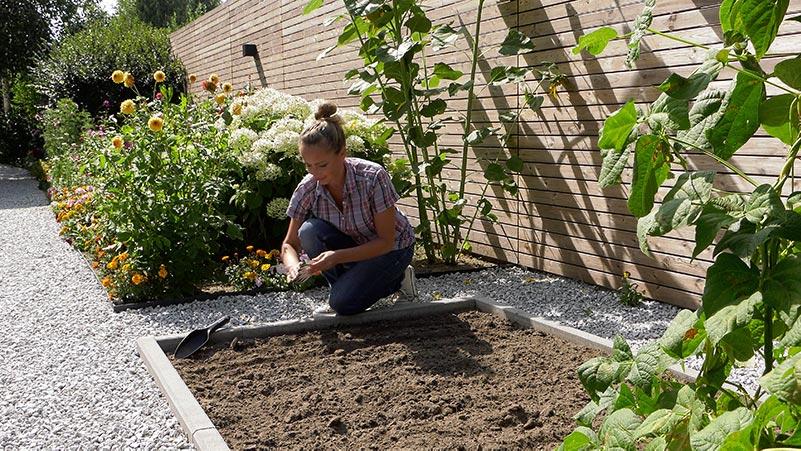 Wrzesień w ogrodzie 06.09 – 12.09 kalendarz ogrodnika