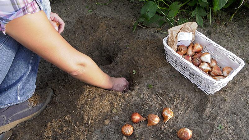 Wrzesień w ogrodzie 13.09 – 19.09 kalendarz ogrodnika