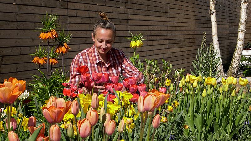 Kwiaty cebulowe – 10 najpiękniejszych kwiatów