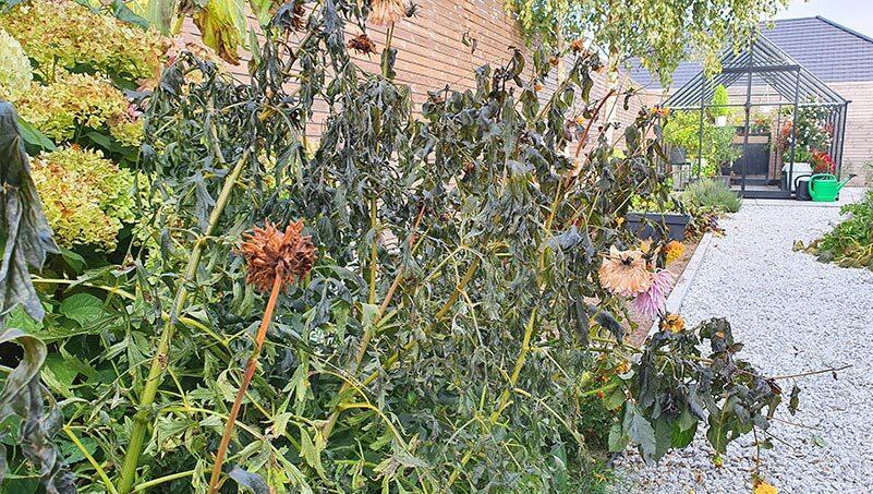 Październik w ogrodzie 11.10 – 17.10 kalendarz ogrodnika