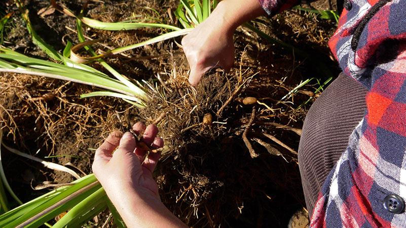 Październik w ogrodzie 04.10 – 10.10 kalendarz ogrodnika